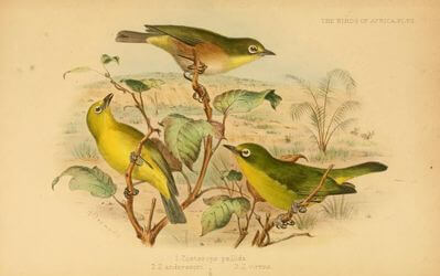 white-eye image slide